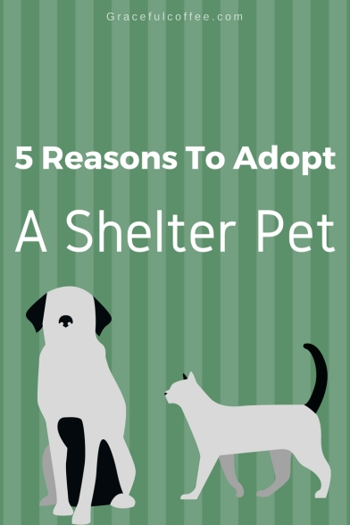 5 Reasons To Adopt